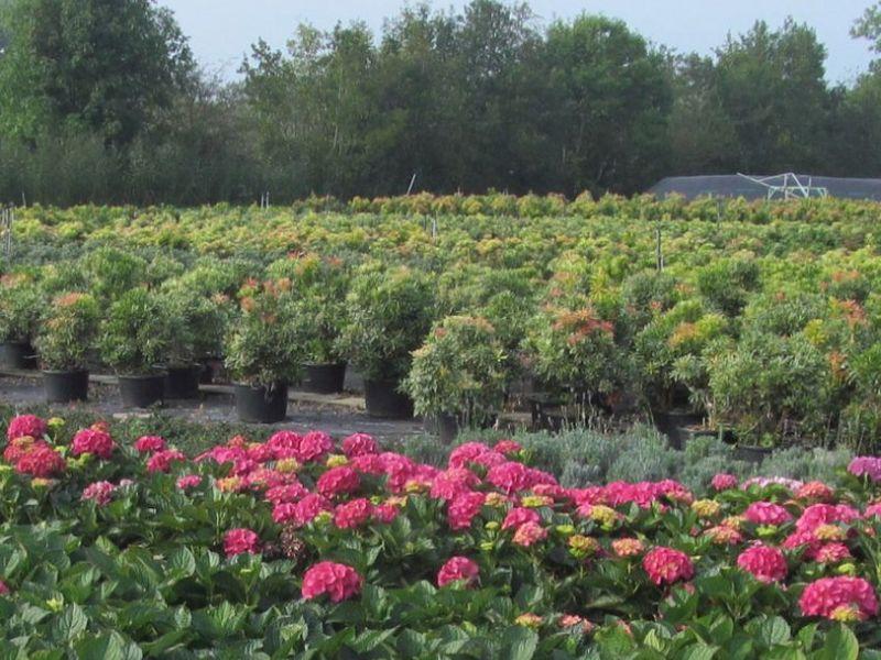 kwekerij in Friesland (7) 800x600